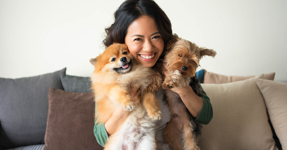Woman holding Yorkie and Spitz dogs on sofa
